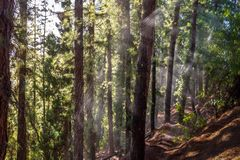 Riegue en un bosque del árbol de pino en Cerro de la Gloria en general San Martin Park - Mendoza, la Argentina imagen de archivo libre de regalías