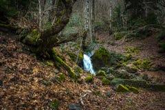 Riegue fluir abajo de rocas, musgo en las rocas, Svaneti, Georgia Fotografía de archivo libre de regalías