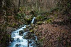 Riegue fluir abajo de rocas, musgo en las rocas, Svaneti, Georgia Imágenes de archivo libres de regalías