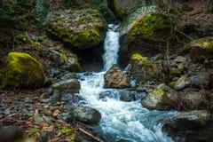 Riegue fluir abajo de rocas, musgo en las rocas, Svaneti, Georgia Foto de archivo