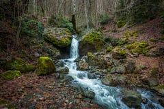 Riegue fluir abajo de rocas, musgo en las rocas, Svaneti, Georgia Imagen de archivo