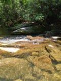 Riegue fluir de los árboles de las rocas de los pescados del claro de la montaña de la cala del río fresco fotografía de archivo