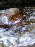 Riegue fluir de los árboles de las rocas de los pescados del claro de la montaña de la cala del río fresco foto de archivo libre de regalías