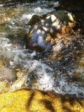 Riegue fluir de los árboles de las rocas de los pescados del claro de la montaña de la cala del río fresco imagen de archivo