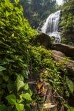Riegue la caída en la estación de primavera situada en selva profunda de la selva tropical. Foto de archivo libre de regalías
