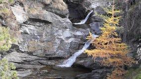 Riegue la conexión en cascada sobre rocas, la cascada y colores del otoño en los árboles de las montañas, amarillos y rojos almacen de video