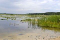 Riegue la naturaleza danesa de Landscape Fotos de archivo libres de regalías