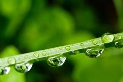 Riegue las gotas en la lámina de la hierba foto de archivo libre de regalías