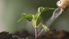 Riegue las plantas en el jardín almacen de metraje de vídeo