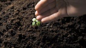 Riegue las plantas en el jardín metrajes
