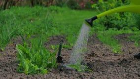 Riegue las plantas en el jardín almacen de video