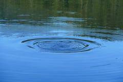 Riegue los círculos con los árboles que la reflexión después de un pato se zambulló en el agua Fotografía de archivo libre de regalías