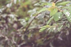 Riegue los descensos en las hojas con un fondo borroso Foto de archivo libre de regalías