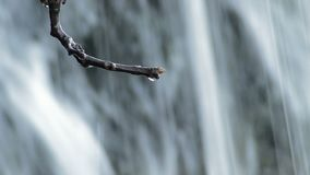 Riegue los descensos que resbalan y que bajan en una rama seca de un árbol en una primavera de agua almacen de video