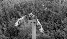 Riese Eagle Owl im Flug mit Flügeln in der Bewegung Lizenzfreie Stockfotos