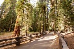 Riese Forest Sequoia National Park stockbilder