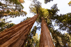 Riese Forest Sequoia National Park lizenzfreie stockfotografie