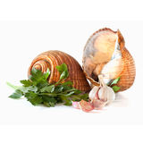 Riese Tun Snails Isolated Stockfoto