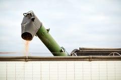 Rieseln von Maiskernen von einem Mähdrescher Lizenzfreie Stockfotos