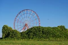 Riesenrad hinter der Blattwand stockfotos