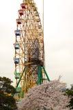 Riesenrad und Kirsche stockfotografie
