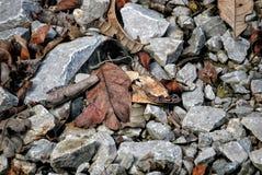 Riesige Ameise in Borneo Malaysia lizenzfreie stockfotografie