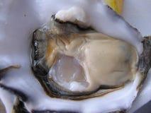 Riesige Auster für Verkauf im Fischmarkt Lizenzfreie Stockbilder