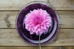 Riesige Dahlieblume auf einer Platte Lizenzfreies Stockbild