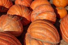 Riesige Kürbise in Halloween auf Anzeige für Verkauf Stockbild