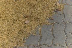 Riesige Menge ungeschälter Reis aus den Grund Lizenzfreies Stockfoto