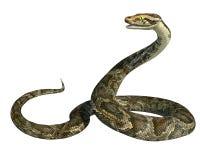 Riesige Pythonschlange lokalisiert Stockbild