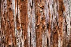 Riesige Rotholz-Baum-Beschaffenheit stockfoto