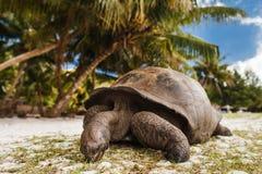 Riesige Schildkröten seychellen stockfotografie