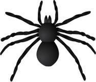 Riesige Spinnen-Abbildung Stockfoto
