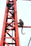 Riesiger Affe auf einem Turm Stockfotos