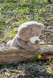Riesiger Bär bewundert eine Blume stockfotografie