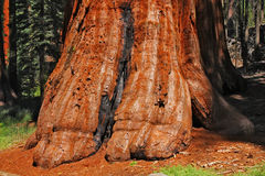 Riesiger Baum Stockbild