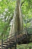 Riesiger Baum Lizenzfreie Stockbilder