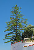 Riesiger Baum Stockfotografie