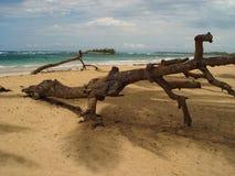 Riesiger Baumstumpf (2) Stockbild