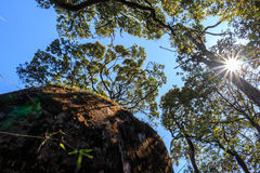 Riesiger Felsen im Wald Stockbild