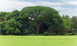 Riesiger großer Baum mit nahem und blauem Himmel des Grases lizenzfreie stockfotografie