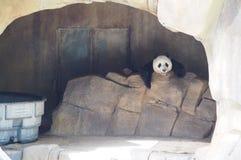 Riesiger Panda stockbilder