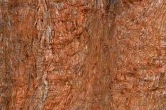 Riesiger Rotholzbaumrinde-Zusammenfassungshintergrund Lizenzfreies Stockbild