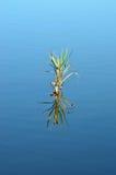 Riesiger Stock reflektierte sich im blauen Wasser von einem See stockbild