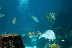 Riesiges Aquarium Stockfoto
