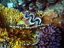 Riesiges glam mit Korallen Stockfoto
