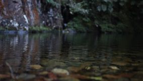 Riesiges Käfer fromfrom das tropische Teil des bolivianischen Regenwaldabschlusses oben, Makro Gro?e tropische K?ferspezies stock footage