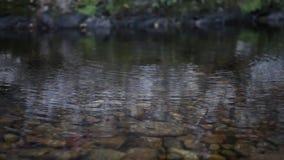 Riesiges Käfer fromfrom das tropische Teil des bolivianischen Regenwaldabschlusses oben, Makro Gro?e tropische K?ferspezies stock video