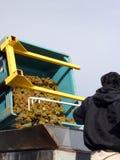 Riesling que entra la trituradora Fotografía de archivo libre de regalías